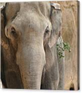 Sad Elephant Canvas Print