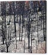 Sad Forest Canvas Print