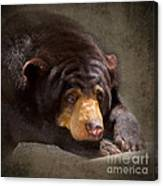 Sad Sun Bear Canvas Print
