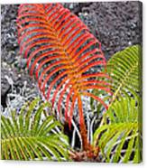 Sadleria Fern Hawaii Canvas Print