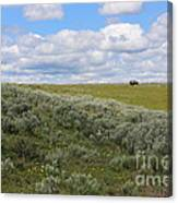 Sagebrush And Buffalo Canvas Print