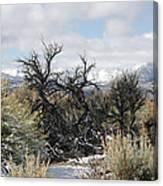 Sagebrush And Snow Canvas Print