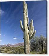 Saguaro Cactus (carnegiea Gigantea) Canvas Print