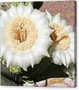 Saguaro Cactus Flowers Canvas Print