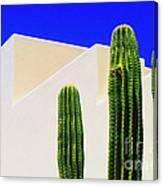Saguaros  Canvas Print