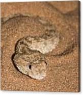 Sahara Sand Viper Cerastes Vipera Canvas Print