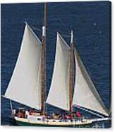Sailboat In The San Francisco Bay . 7d7900 Canvas Print