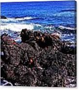 Sally Lightfoot Crabs On Basalt Canvas Print