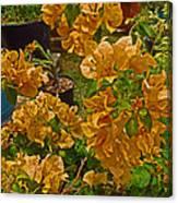 Salmon Bouganvilla Canvas Print