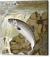 Salmon, C1900 Canvas Print