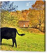 Salt Box Farm Canvas Print