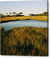 Salt Marsh, Assateague Island, Virginia Canvas Print
