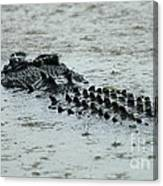 Salt Water Crocodile 3 Canvas Print