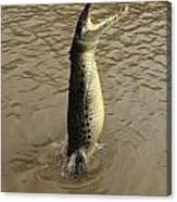 Salt Water Crocodile Canvas Print