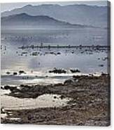 Salton Sea Birds Canvas Print