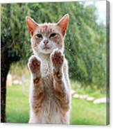 Salute Cat Canvas Print