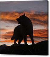 Samoyed At Sunset Canvas Print