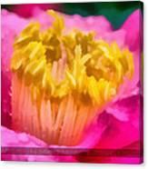 Sample-camellia Canvas Print