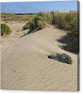 Sand And Grass Dunes Canvas Print