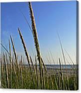 Sand Dune Grasses Canvas Print