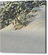 Sand Dune Greenery Canvas Print