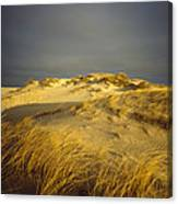 Sand Dunes And Beach Grass In Golden Canvas Print