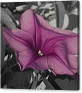 Sand Flower Canvas Print