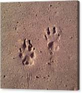 Sand Paws Canvas Print