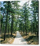 Sand Road Through The Pine Barrens, New Canvas Print