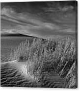Sand Shrub 4 Canvas Print