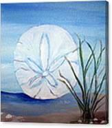 Sanddollar  Canvas Print