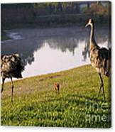 Sandhill Crane Family Fun Canvas Print