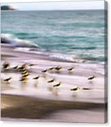 Sandpiper Evening Canvas Print