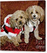 Santa Puppies Canvas Print