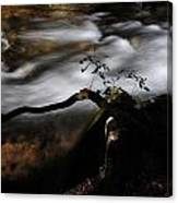 Sappling Growing By The Stream Canvas Print