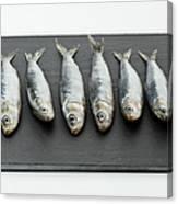 Sardines On Chopping Board Canvas Print