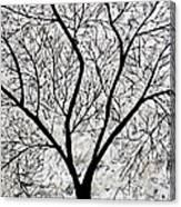 Sarvaras Canvas Print