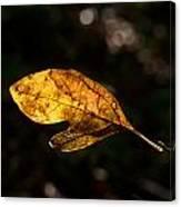 Sassafras Leaf Glowing Canvas Print