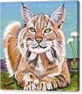 Sassy Lynx Canvas Print