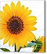 Sassy Sunflower Canvas Print