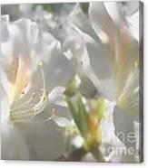 Satin White Azaleas Canvas Print