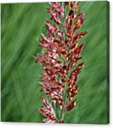 Savannah Ruby Grass Canvas Print