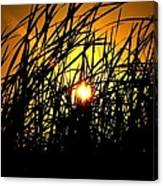 Sawgrass Sunrise Canvas Print