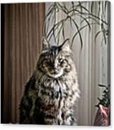 Say Meowww Canvas Print