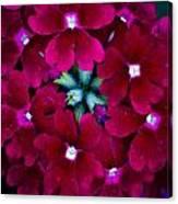 Scarlet Bouquet  Canvas Print