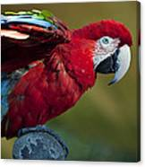 Scarlet Macaw Canvas Print