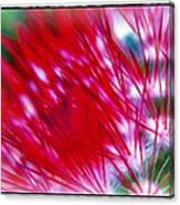 Scarlet Sabers Canvas Print