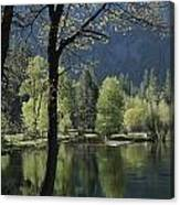 Scenic View Of The Merced River Canvas Print
