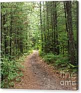 Scenic Walk Canvas Print