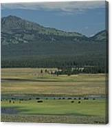 Scenic Wyoming Landscape With Grazing Canvas Print